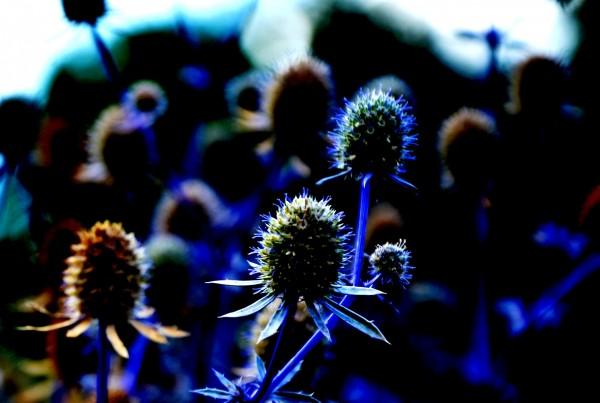 flower power no. 02