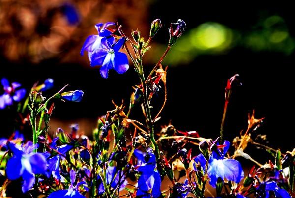 flower power no. 04