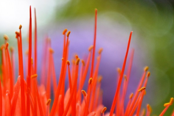 flower power no. 05